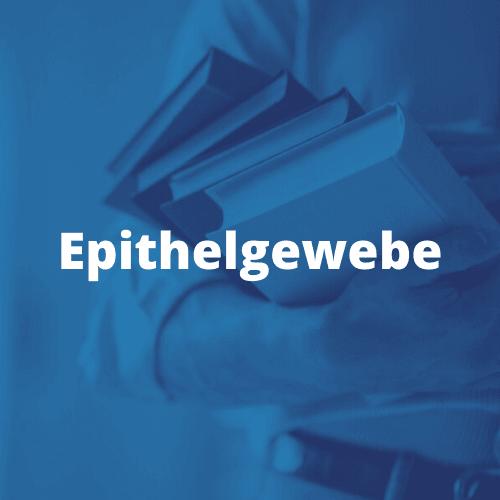 Epithelisierung Epithelgewebe